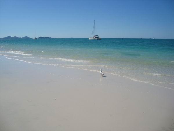 Whitest sand!