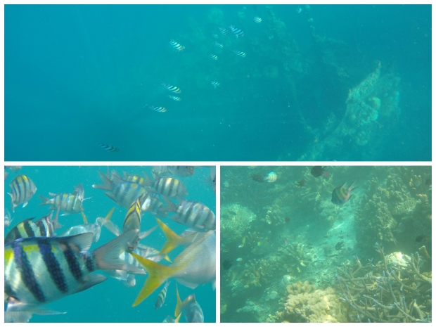 Ship Wreck (Top Photo); Fish Feeding (Bottom Left); Corals (Bottom Right)
