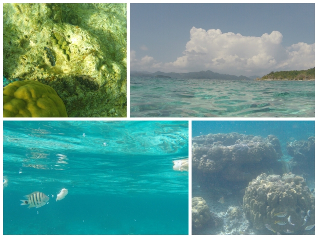 Snorkeling at Malcapuya Island. Clams (Top Left); Fish Feeding (Bottom Left);