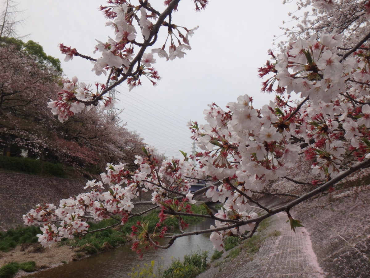 A CHERRY BLOSSOMS EXPERIENCE IN CENTRAL JAPAN: How My Mom & I Spent ₱19,600 Each ALL-IN for 3 Days in Nagoya, Takayama, & Shirakawago