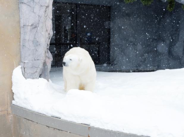 Stunning Hokkaido Best of Winter Niseko Sapporo Sounkyo Biei Lake Shikotsu (25)