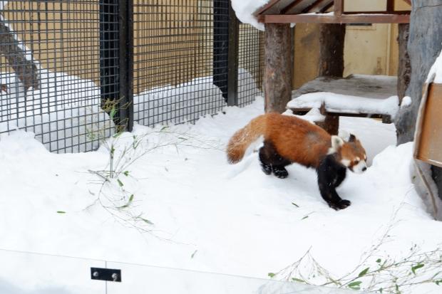 Stunning Hokkaido Best of Winter Niseko Sapporo Sounkyo Biei Lake Shikotsu (26)