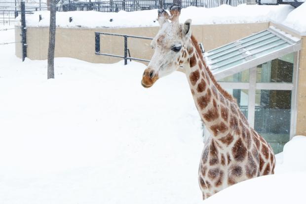 Stunning Hokkaido Best of Winter Niseko Sapporo Sounkyo Biei Lake Shikotsu (29)