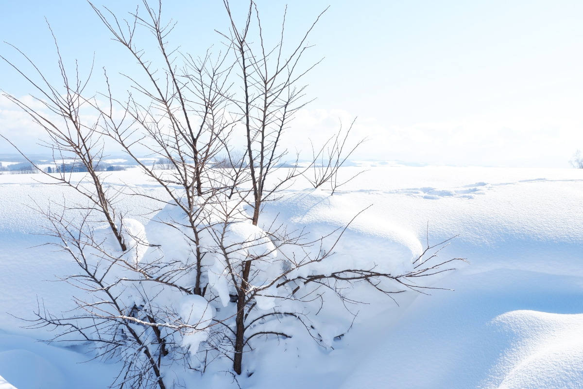 STUNNING HOKKAIDO: Experiencing the Best of Winter in Niseko, Sapporo, Sounkyo, Biei, & Lake Shikotsu