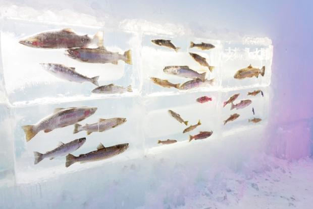 Stunning Hokkaido Best of Winter Niseko Sapporo Sounkyo Biei Lake Shikotsu (70)